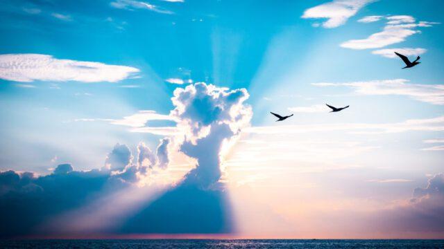 Vrij als een vogel – bijbelstudie van H.J. Messelink